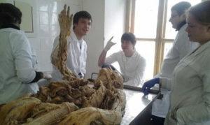 Где учат на патологоанатома rfrbt 'rpfvtys