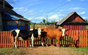 Дом в деревне земли ижс можно держать корову